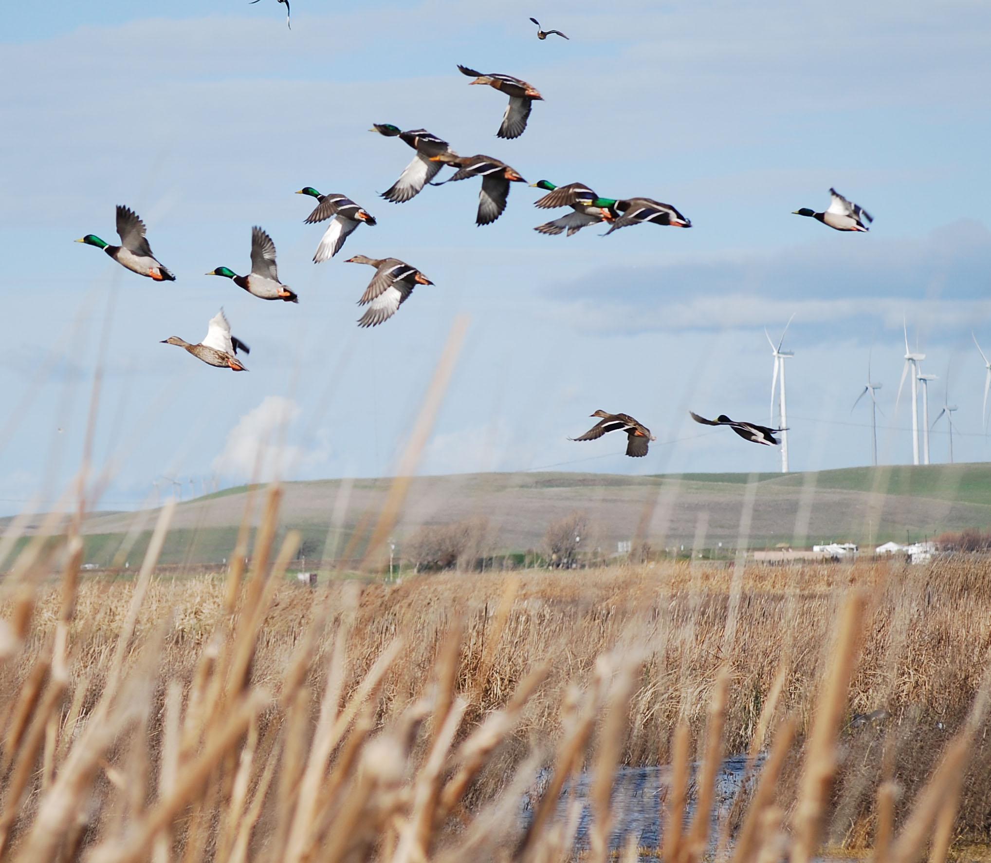 What's a Duck Club Worth? – Rich Fletcher's Blog | 2036 x 1772 jpeg 408kB