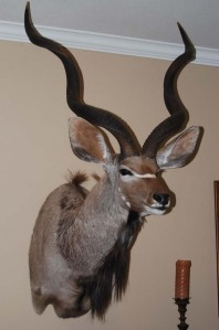 Here's a classic African trophy mount from my trip to South Africa in July 2007. It hangs in my family room.