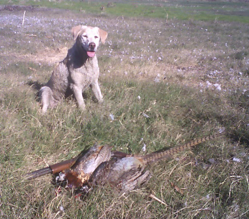 11_19_05_11val-with-pheasants-cropped1