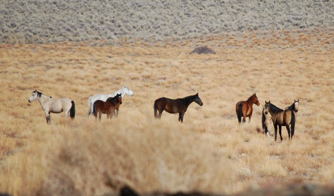 wild-horses-cropped-and-resized
