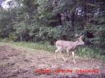 deerpics-missouri1-resized