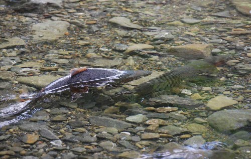 spawning-cropped-and-resized1