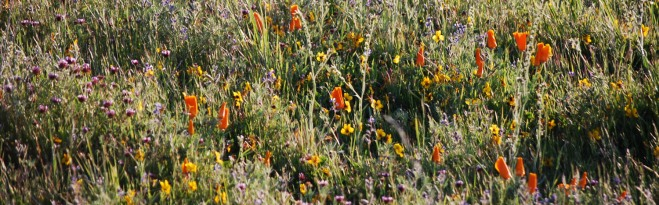 wildflower-smorgasboard-cropped-and-resized1