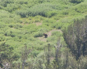 black bear best cropped