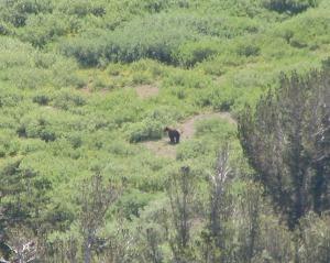 black bear best cropped