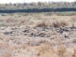 upland habitat responding to manipulation