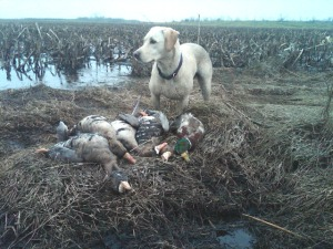 You'll bring home more birds if you hunt with a good retriever. Specs are good at hiding.