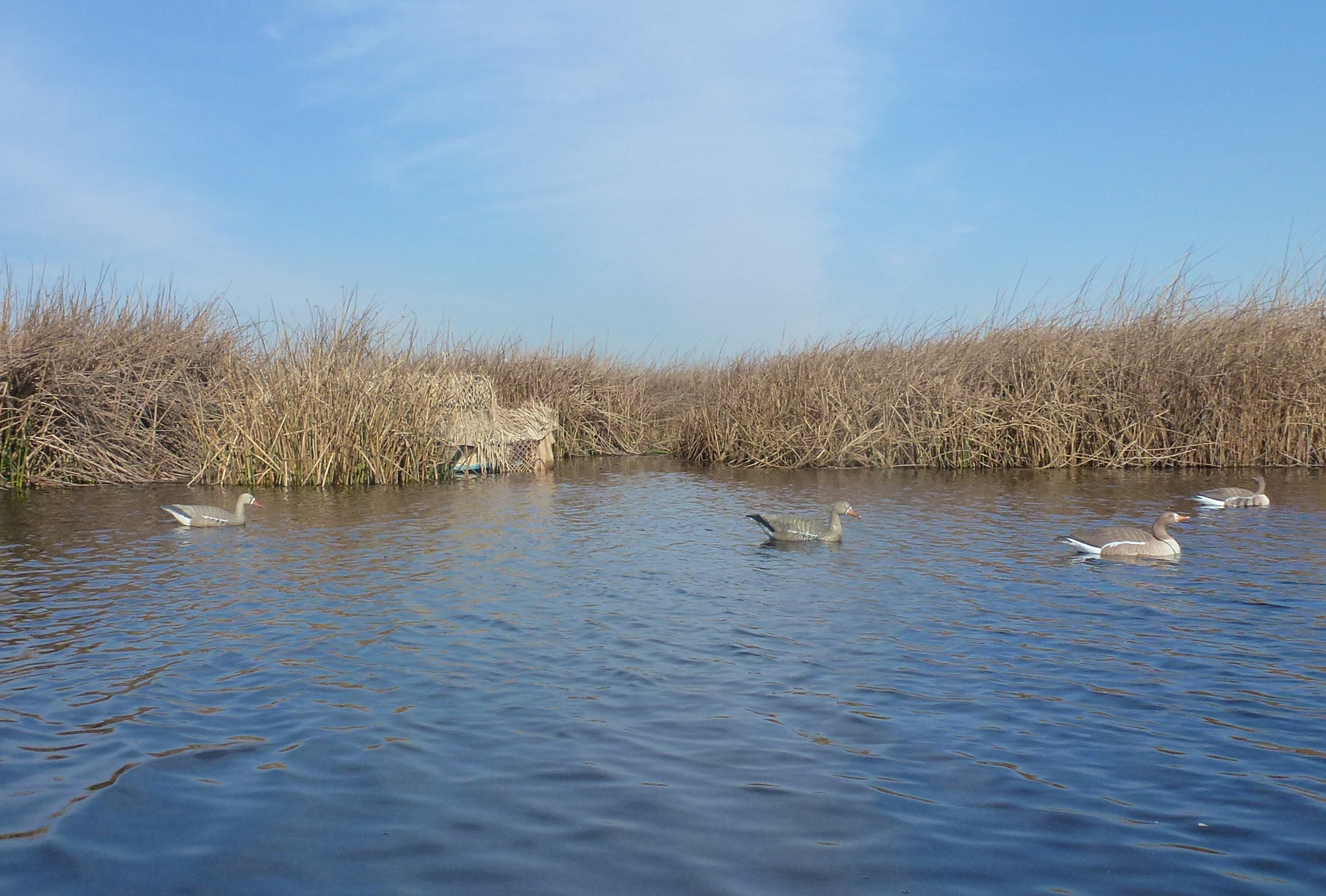 luxury rich plans images pontoon fletcher duck of cabin best boat blind s blinds