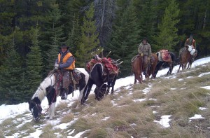Scott Stouder provided me with this photo of the crew hauling Rick Leas' bull off the mountain.