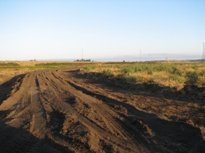 In 2011, work began to rebuild to create a permanent marsh designed for carbon offsets and subsidence prevention.