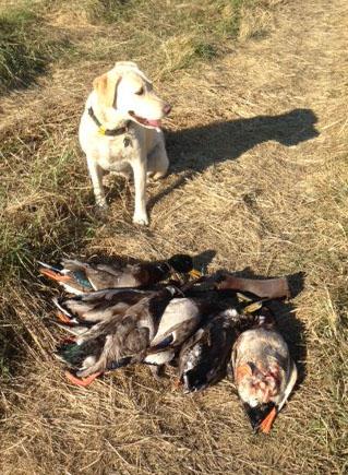 Lola with ducks 12-11-13
