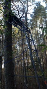Two man tree stand where we hunted.