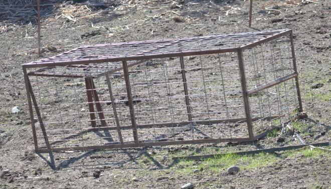 DSC_0156 pig trap