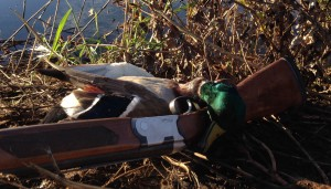 This greenhead came to my mallard call.