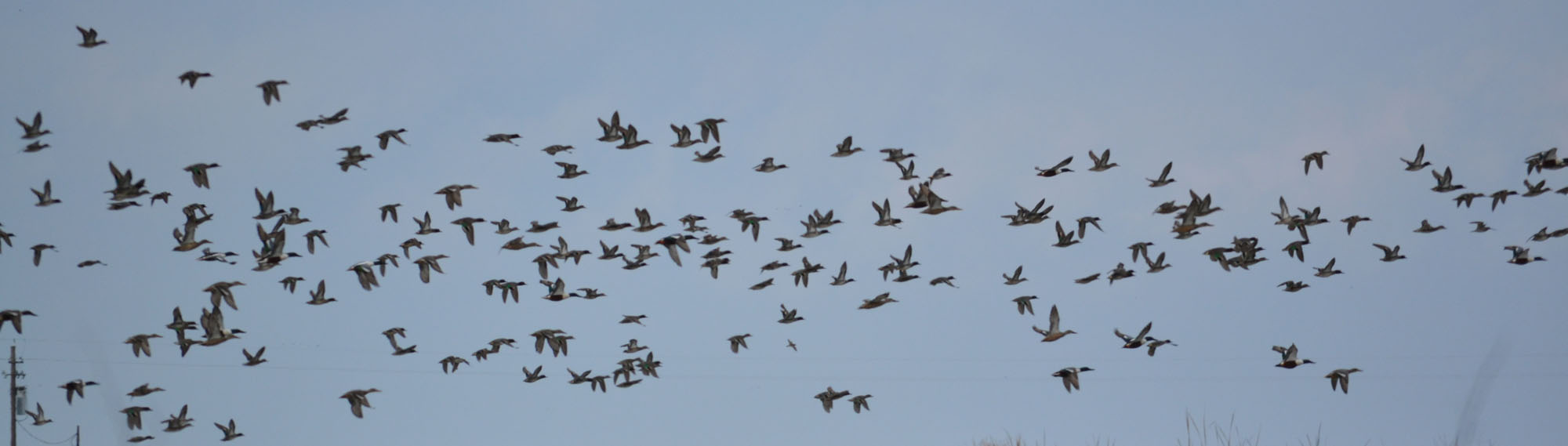 Where Teal Are King – Rich Fletcher's Blog