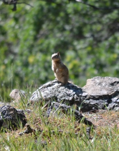 Ground squirrels commonly live in these rock outcroppings.
