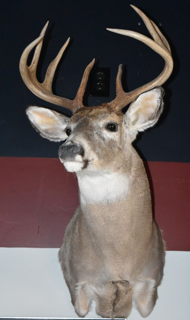 I hope the Montana mule deer is as attractive as this Idaho whitetail, which is a favorite of mine.