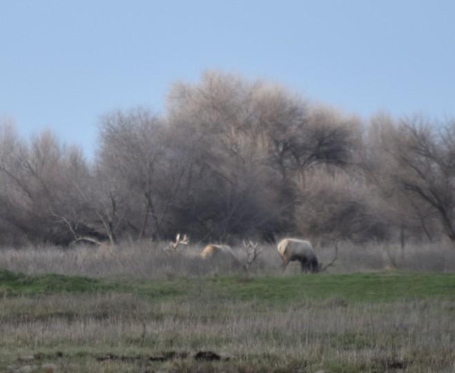 DSC_0072[1] three bulls SLNWR 1-13-16