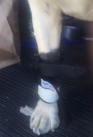 IMG_1846 brace on leg