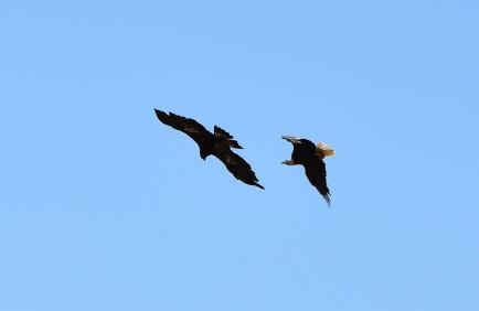 DSC_0059[1] eagles engage