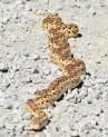 DSC_0097[1] gopher snake