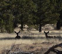 Preseason deer tend to be calm.