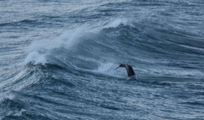 DSC_0304[1] flipping dolphin
