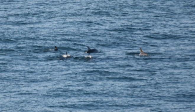 DSC_0332[1] dophin family
