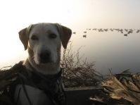 kerry-duck-hunt-001