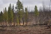 dsc_04381-burn-north-of-janes-reservoir