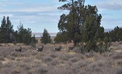 These deer were located north of Clear Lake in X2.