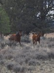 Lots of wild horses in the Devils' garden.