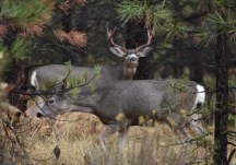You'll have a better chance for big bucks if you can hunt during the rut.