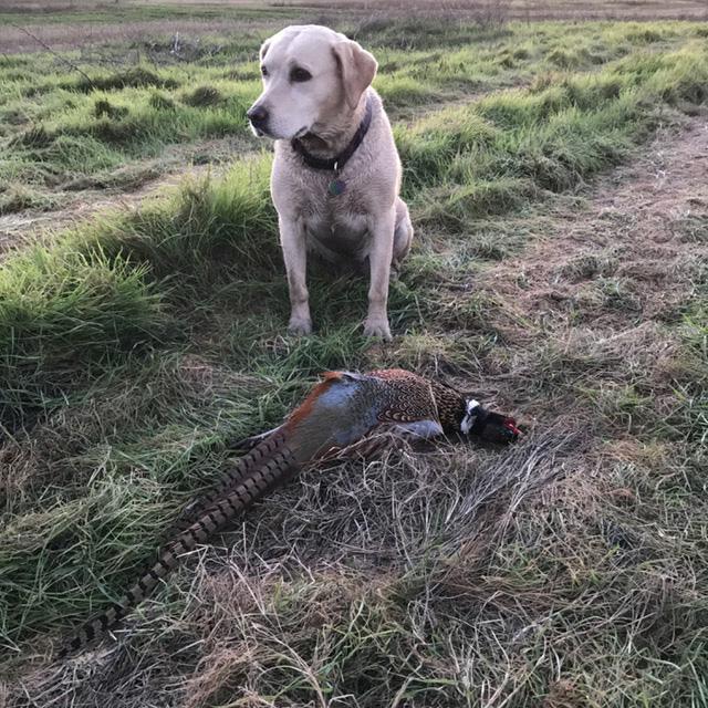 img_2444-lola-and-pheasant