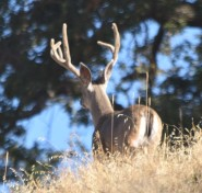DSC_0126[1] big buck