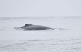whale DSC_0810[1]