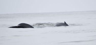 whale DSC_0813[1]