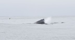 whale DSC_0837[1]