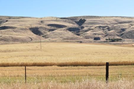 DSC_0058[1] barley field