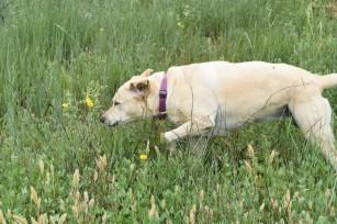 DSC_0887[1] June habitat with Lola