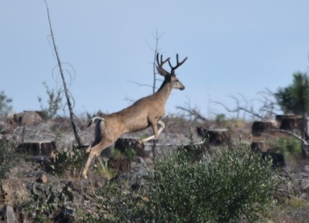 This is how one buck chose to react.