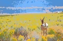 DSC_0016[1] antelope