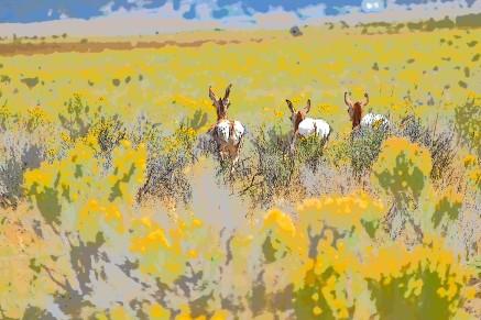 DSC_0017[1] antelope