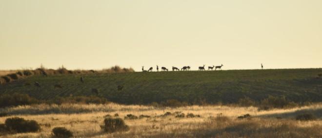 DSC_0035[1] deer at dusk