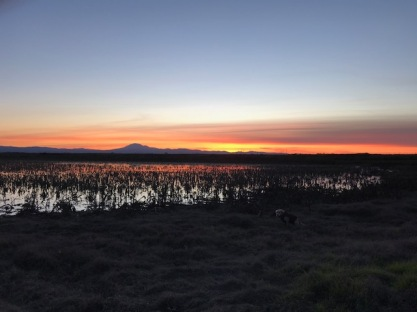 Our typical sunset on Webb Tract in the Delta