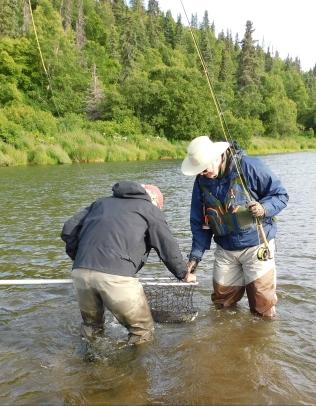 Guide, Jack nets Bob Smallman's sockeye.