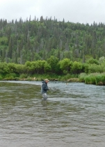 I'm fishing for trout as a brown bear snorkels for sockeye salmon about 20 yards up stream. You can see his ears only.