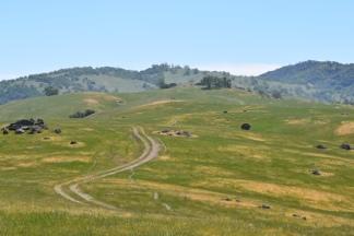 Ridge on Ohlone Preserve.