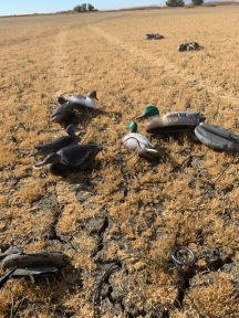 These decoys have some new paint, new line and new weights.