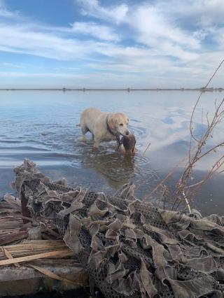 Lola's retrieves were slow but effective.
